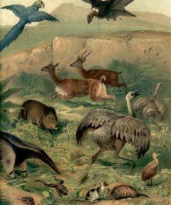Neotropical Fauna Kort - The Dybdahl Co.